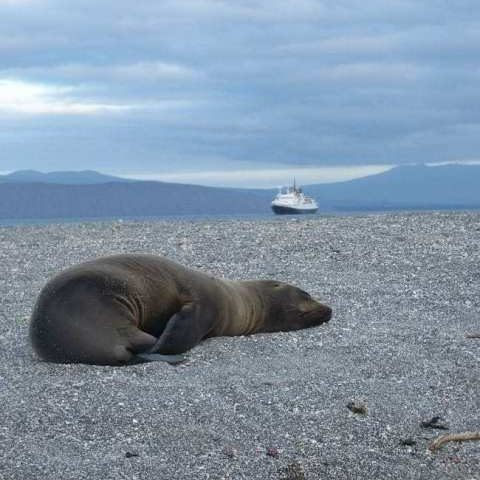 Sea lion pup, Galapagos